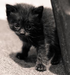 Tiny black kitten with huge black eyes
